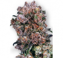 Blueberry от Dutch Passion