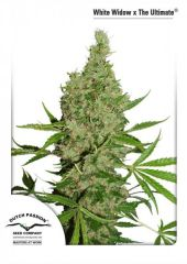 White Widow The Ultimate