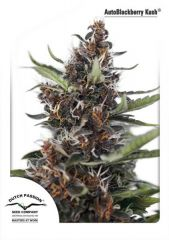 AutoBlackberry Kush от Dutch Passion