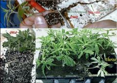All About Bonsai Moms 018